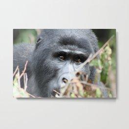 Ugandan Gorilla Metal Print