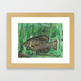 Black Crappie Fish in River Water Framed Art Print