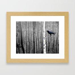 Black Bird Crow Tree Birch Forrest Black White Country Art A135 Framed Art Print
