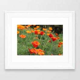 Poppies 2 Framed Art Print