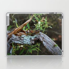 A Lubber in the Slough II Laptop & iPad Skin