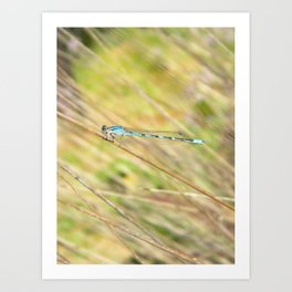 Damselfly friend Art Print