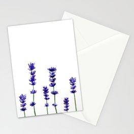 Lavender plant Stationery Cards