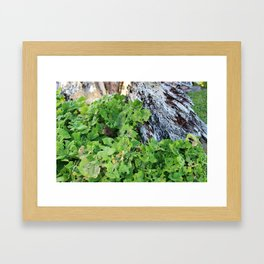 Foliage and Decay Framed Art Print