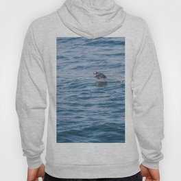 Cute Puffin takes off from the water Hoody