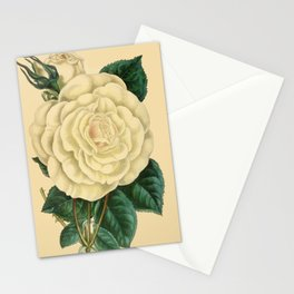 Paxton's Magazine of Botany 1841 - Rose Devoniensis Stationery Cards