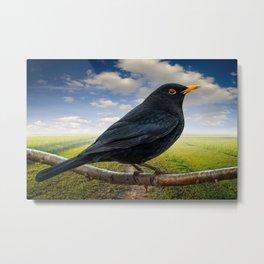 Mr Blackbird UK Metal Print