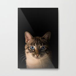 Cat Photography, Felix the cat Edit Metal Print