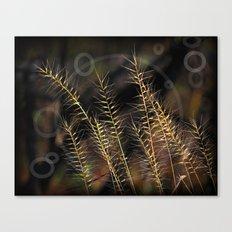Grass Of Circles Canvas Print