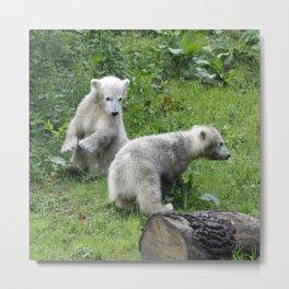 Polarbear20150305 Metal Print