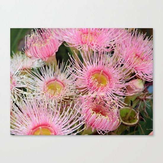 Pink Flowering Gum Canvas Print