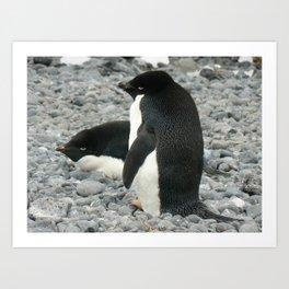 Adelie Penguins, Antarctica 2006 Art Print