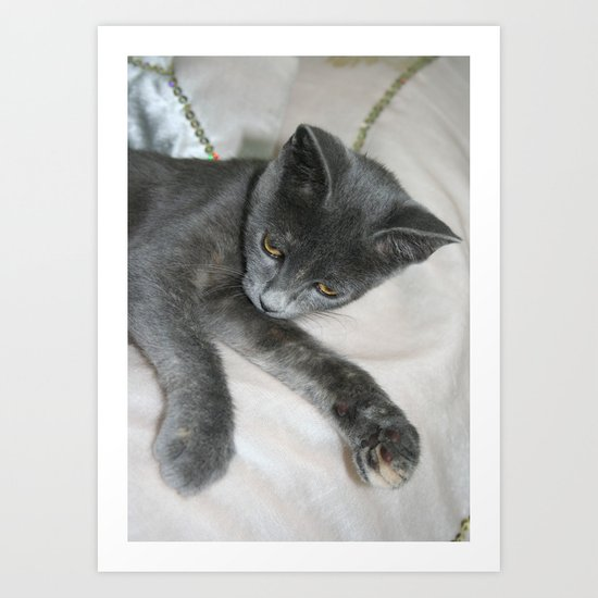 Cute Grey Kitten Relaxing  Art Print