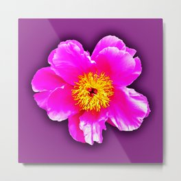 Pink flower on a wintry background Metal Print