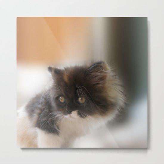 Nano Baby Kitten Metal Print