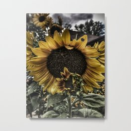 Sunflower and baby Metal Print