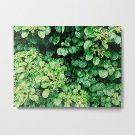 Leaf wall Metal Print