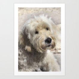 Dog Goldendoodle Golden Doodle Art Print