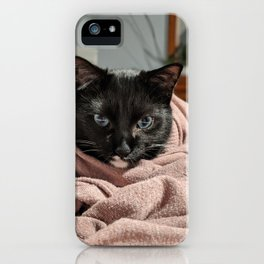 Cozy Kitty iPhone Case