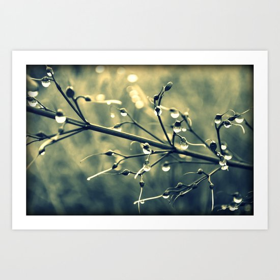 morning drops Art Print