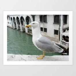 Bird in Venice Art Print