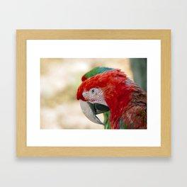 Green Winged Macaw Portrait Framed Art Print