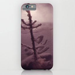 SPRUCE COATED WITH SNOW IN ISH RIVERS COUNTRY OF THE PACIFIC NORTHWEST. NEAR SEATTLE NARA 555071 iPhone Case