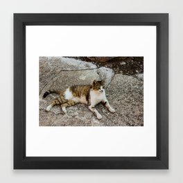 Chill Cat Framed Art Print