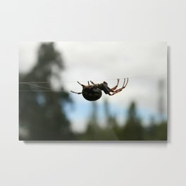 Orb Weaver Spider on a Web Metal Print