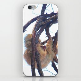 Two-toed sloth and orchids in Costa Rica iPhone Skin