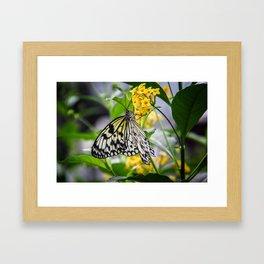 """""""Butterfly"""" Framed Art Print"""