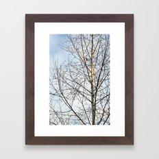 Birch Tree 9781 Framed Art Print