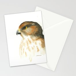 juvenile red-tailed hawk Stationery Cards