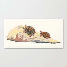 The Tortoise on a Rock Canvas Print