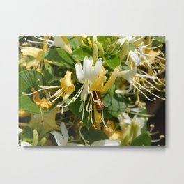 Honeysuckle Bee Metal Print