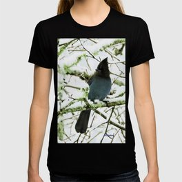 Steller's Jay in the Snow T-shirt