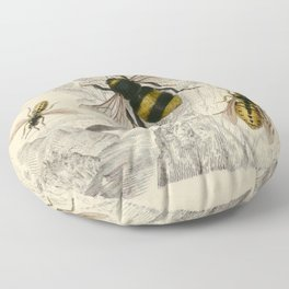Naturalist Bee And Wasps Floor Pillow