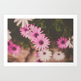 Hot Pink Daisies Art Print