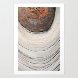 Organic Wood Structure - Tree of Japan - Botanical Natural Wall Art - Photography Print - Detail of Nature Art Print