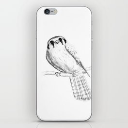 American Kestrel pencil front on iPhone Skin
