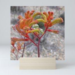 Orange Kangaroo Paw Flowers Mini Art Print