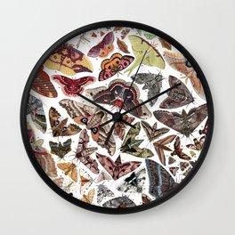 Moths of North America Wall Clock
