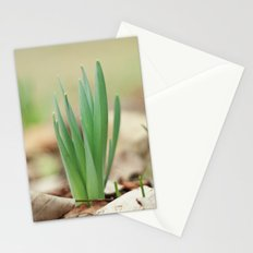 Daffidil Stationery Cards