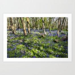 A carpet of bluebells Art Print