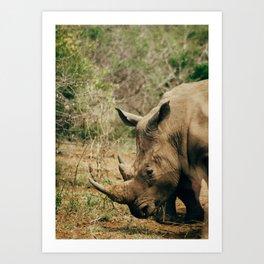 White Rhino 1 Art Print