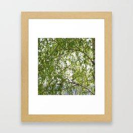 wood birch Framed Art Print