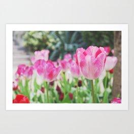 Winter tulip Art Print