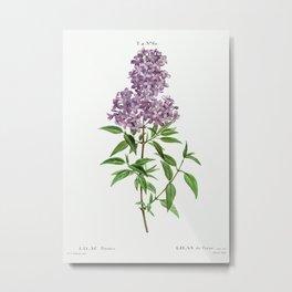 Persian lilac (lilac persica) from Traité des Arbres et Arbustes que l'on cultive en France en plein Metal Print