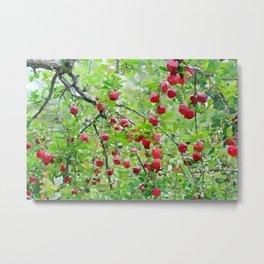 Apple Trees Metal Print