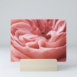 Blushing Swirl Mini Art Print